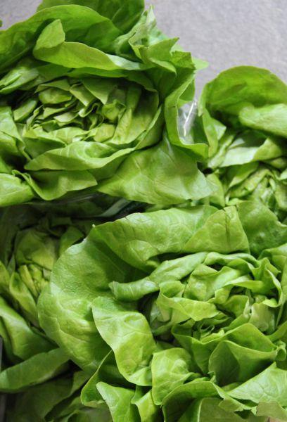 Salat diverse Sorten