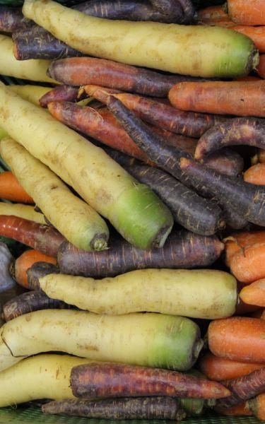 Karotten bunt gewaschen