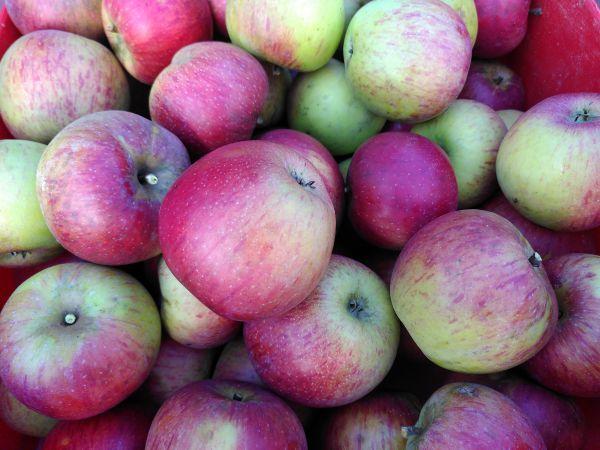 Äpfel Mischung