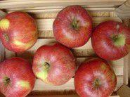 Apfel Beutelsbacher Rambur