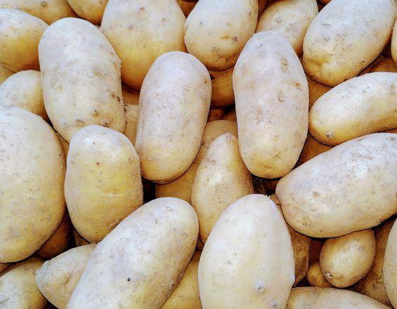Kartoffeln Ditta/Belinda