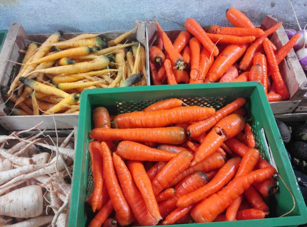 Karotten orange