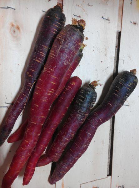 Violette Karotten