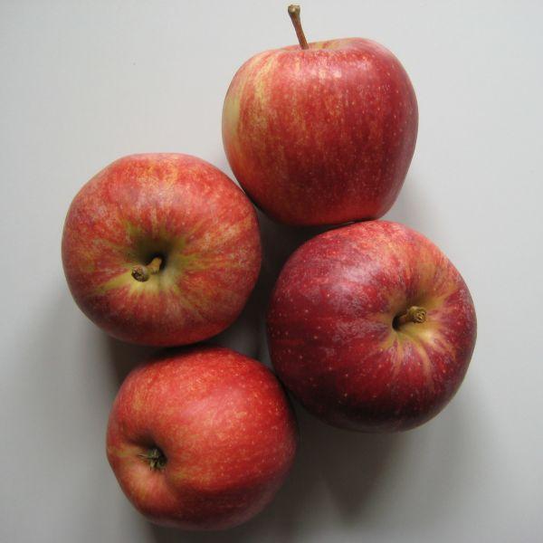 """Äpfel """"Gala"""""""