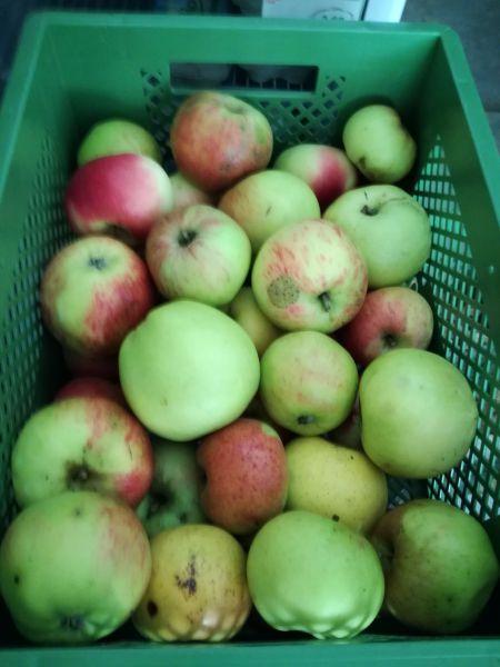 Äpfel - Kochäpfel