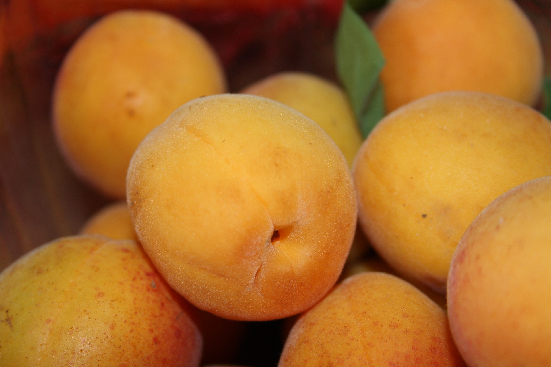 apricot-1424902_1920