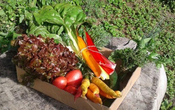 Gemüsekisterl KLEIN (klassisch)